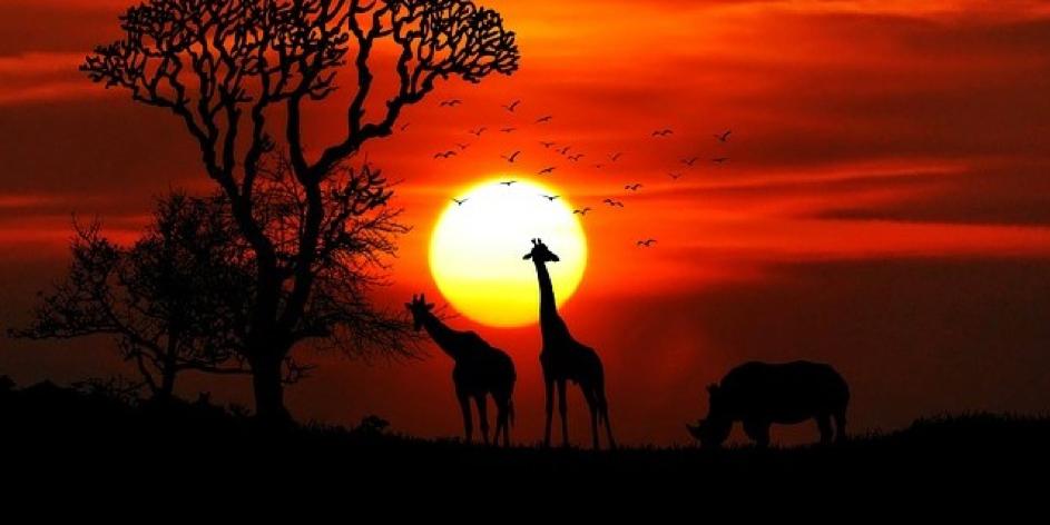 vakantie canada safari nabibie
